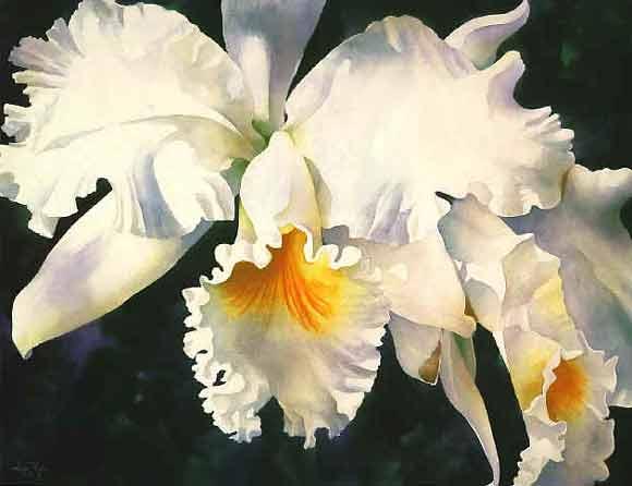 orchid_magic