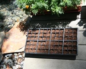 seedlingtray1