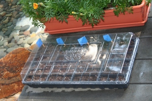 seedlingtraycovered1