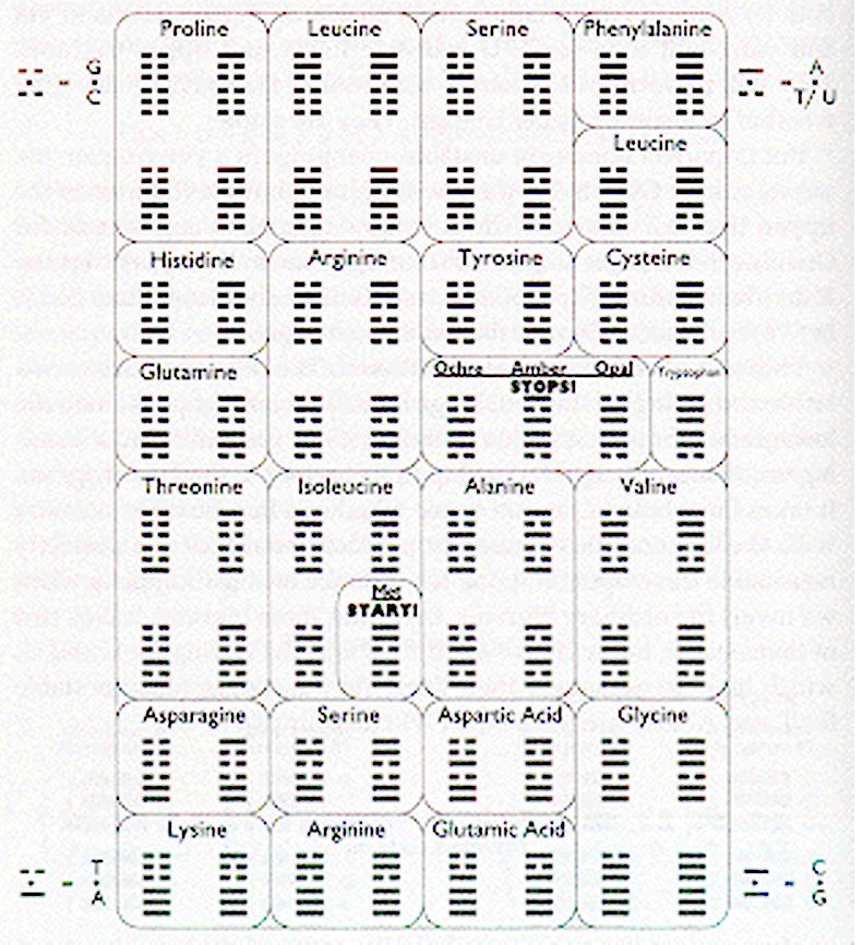 dna iching chart