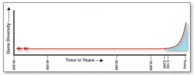 human timeline
