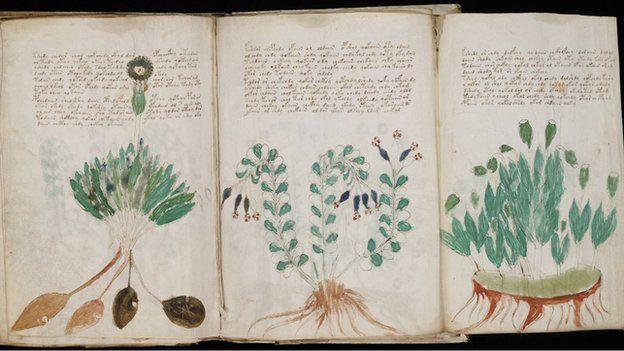 voynich_manuscript_170