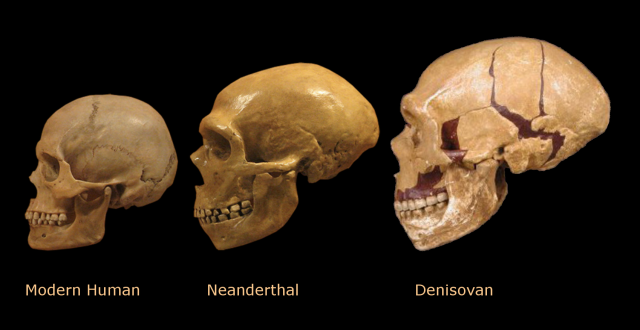 Find out more about the history of Denisovans including videos interesting articles pictures historical features and more Get all the facts on HISTORYcom