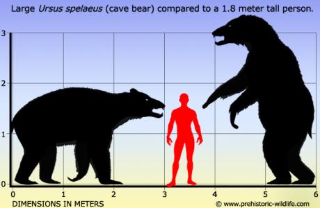 ursus-spelaeus-cave-bear-size