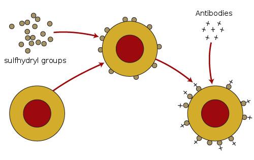 bloodreceptors